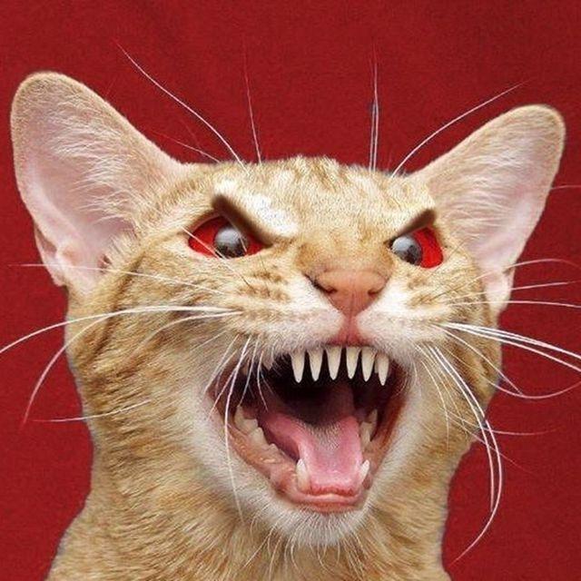 Про, картинки с надписью бешеный кот